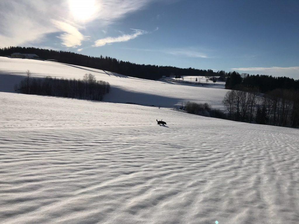 ahorn winter