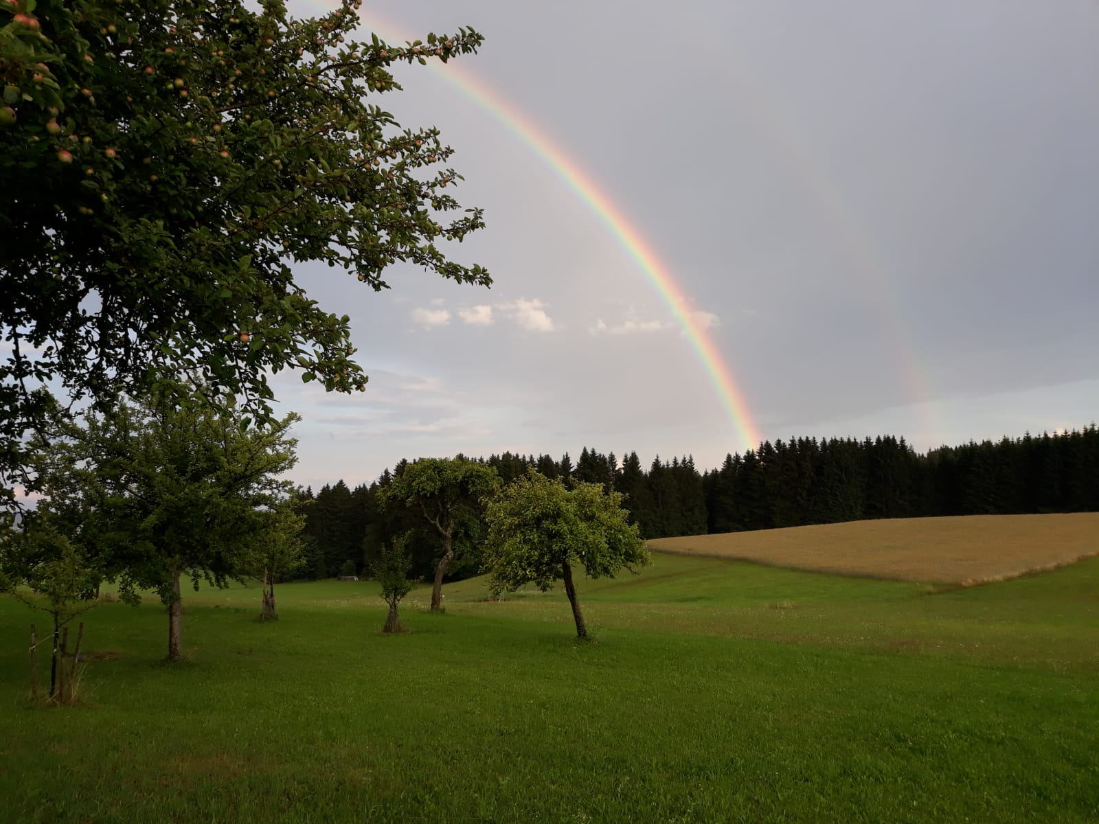 Waldschlag Regenbogen